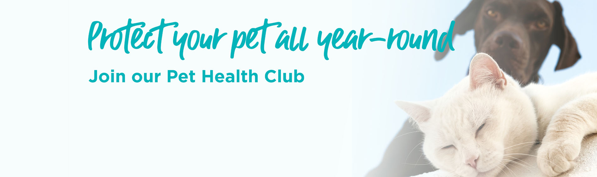 Pet Health Club in Northampton | Spinney Vets