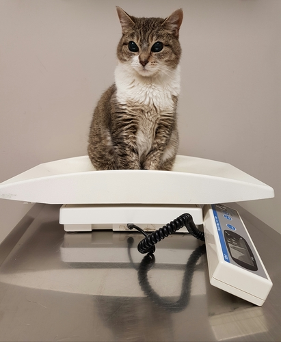 Weight Clinics with our Pet Health Advisers