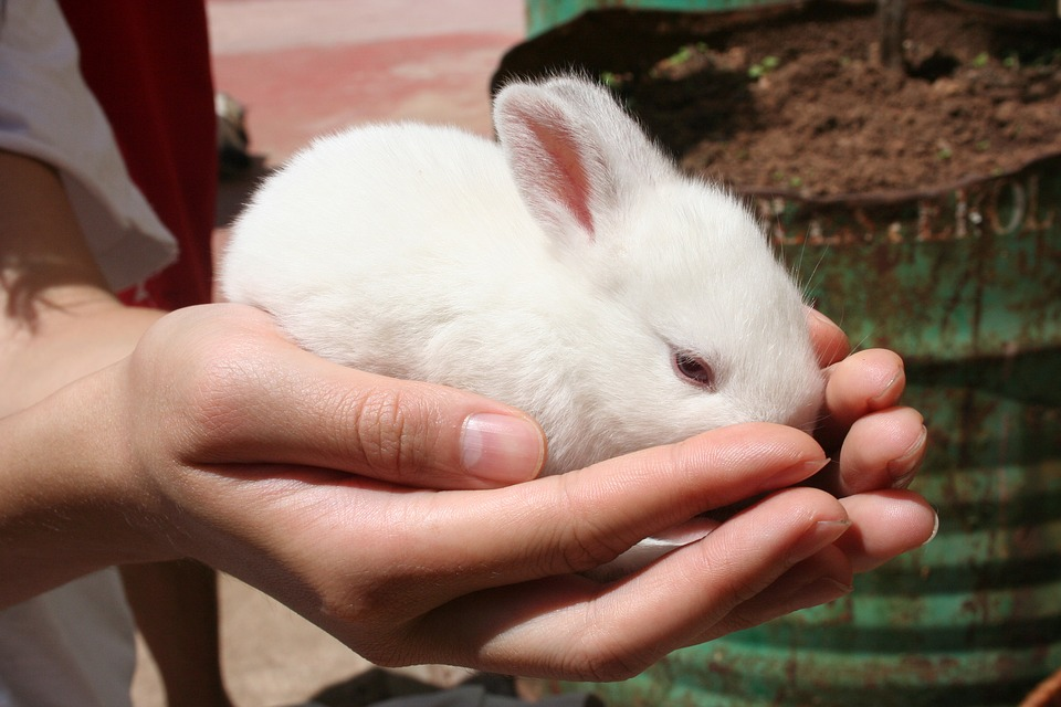 How to Care for a New Pet Rabbit