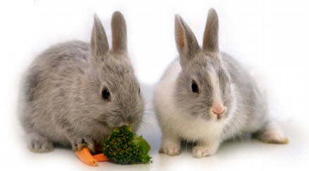 Your Rabbits Diet — Tips & Advice
