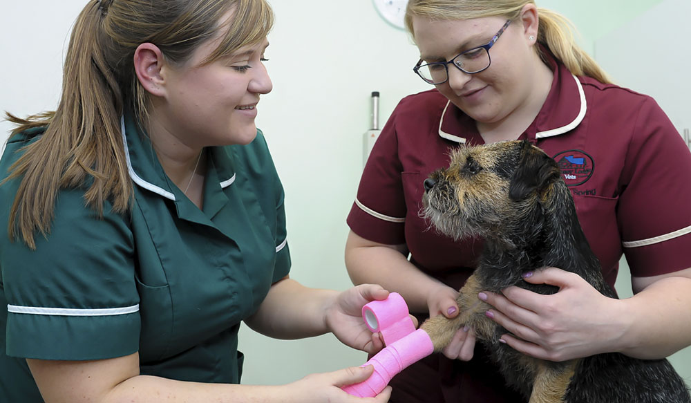 Rebecca Humphrey, vet nurse at Spinney Lodge Vets, in Northampton