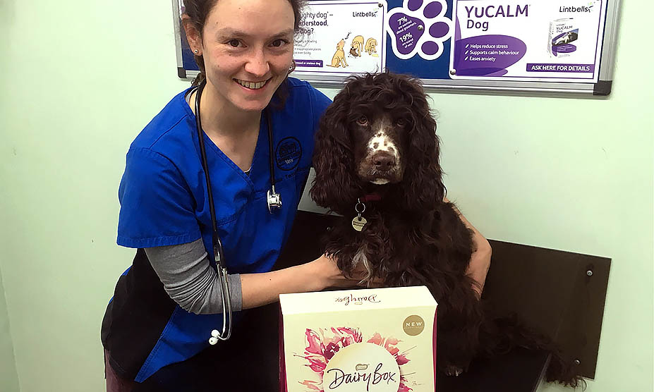 Chocolate can pose a real danger to dogs this Easter