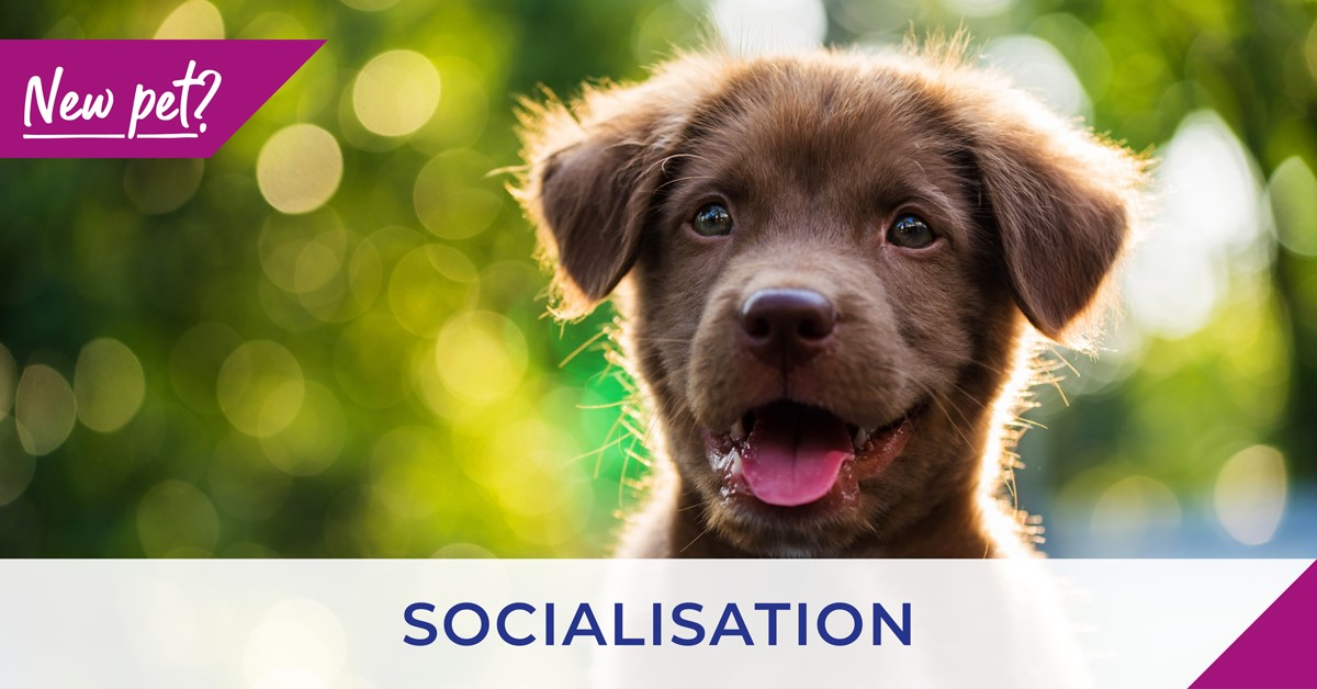 brown puppy with socialisation text
