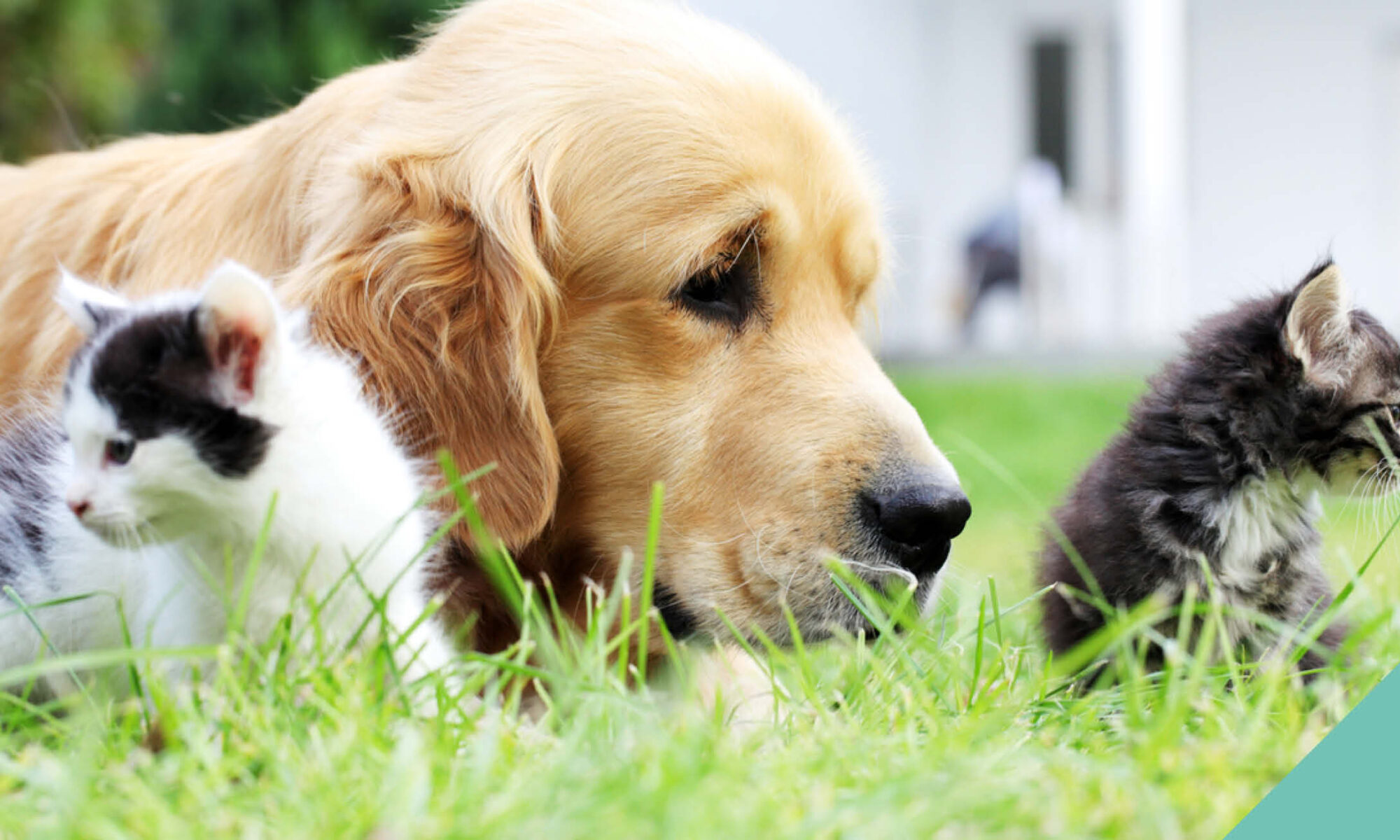 Two kittens and a dog lying in the grass