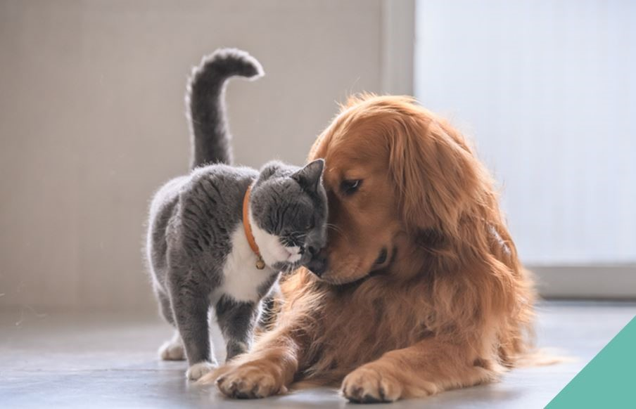 cat and dog hugging eachother