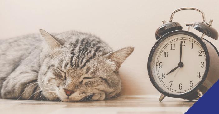 cat sleeping next to clock