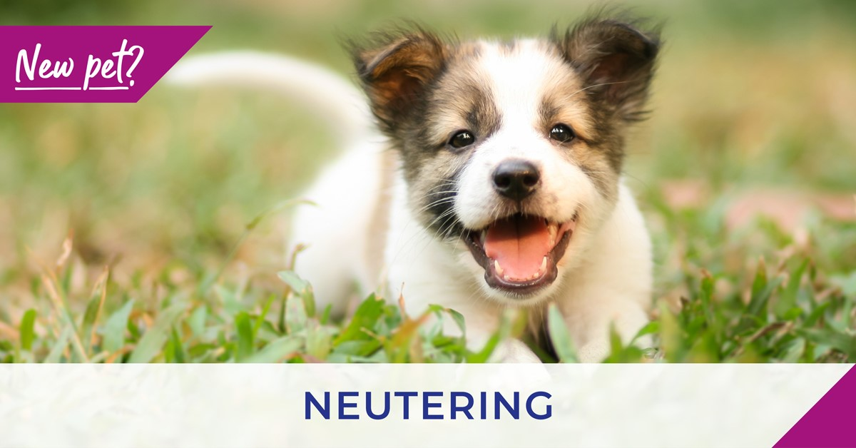poster for dog neutering with small dog on grass