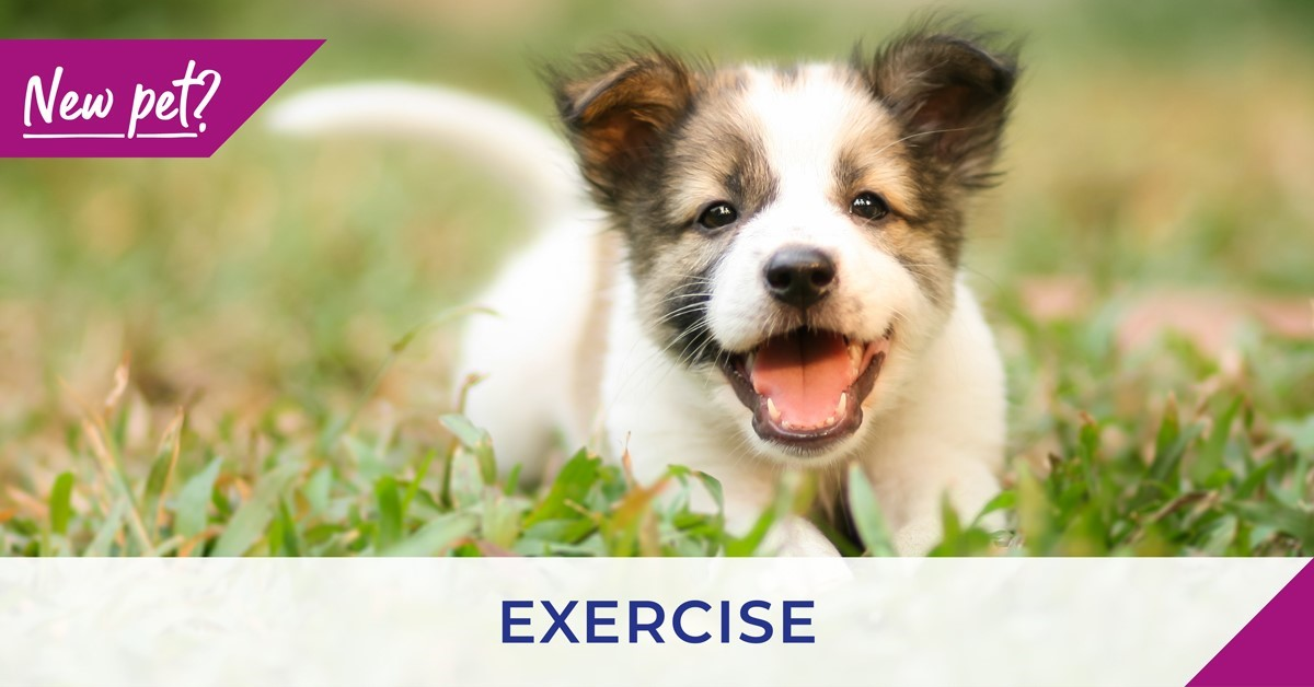 Puppy on grass with exercise text
